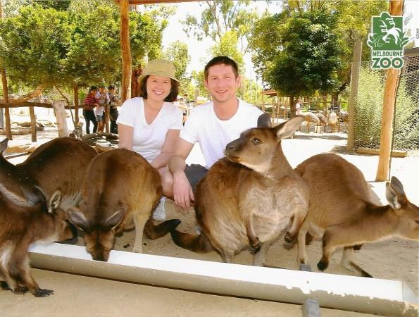 Melbourne Zoo Close Encounters Kangaroos