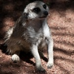 Fetching Friday – Resources Mashup & Animal Crackers