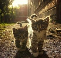 cute-cats