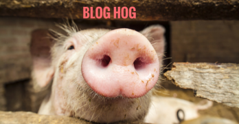 Why My Blog is a Hog and Tips for YOU