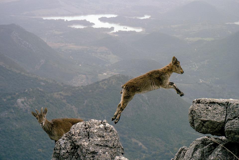 mountain-goats-1156056_960_720